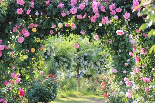 アタナハの庭